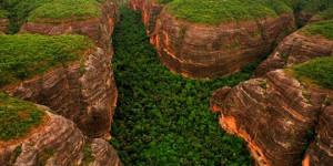 Piauí é o terceiro do Brasil em ranking de desmatamento da Mata Atlântica