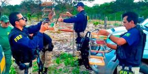 Polícia Rodoviária Federal prende 44 pessoas em operação contra crimes ambientais; vídeo