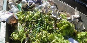 Transmídia: produtos desperdiçados na nova Ceasa alimentariam 3 mil pessoas por dia