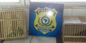 Polícia Rodoviária Federal apreende animais silvestres em Teresina