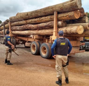 PF e Ibama deflagram operação contra extração ilegal de madeira