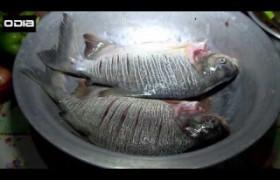 Sabor do Dia: Receitas simples e deliciosas à base de peixe