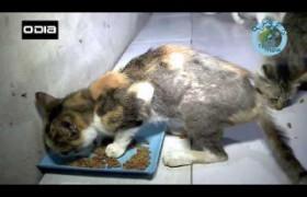 Especial Transmídia: Pessoas que se dedicam a ajudar os animais