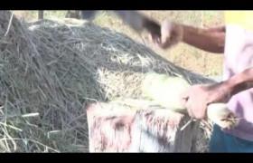 Carnaúba ajuda trabalhador rural em tempos de estiagem