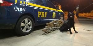 Cão farejador da PRF encontra cerca de 26 kg de maconha em ônibus