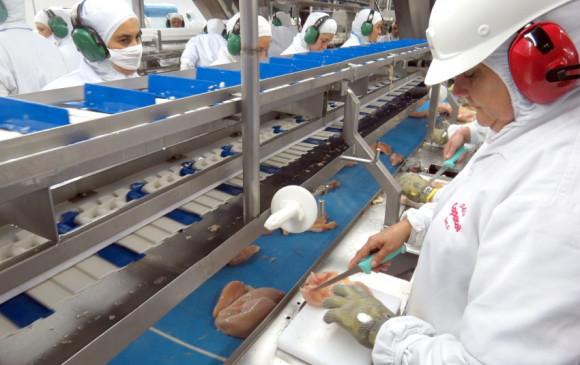 Com embargo da União Europeia, preço do frango pode cair no Brasil, segundo associação