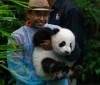 2º panda nascido no zoo de Kuala Lumpur é apresentado ao público