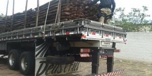 PRF apreende caminhão com mais de 60 toneladas de madeira ilegal