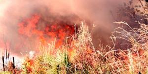 No mês mais quente do B-R-O-Bró, Piauí registra 82 queimadas por dia