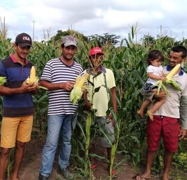 Com energia solar, agricultores comemoram alta na produção