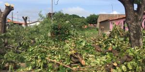Crime ambiental: empresa corta árvores de praça no bairro Saci e moradores protestam