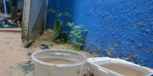 Casos confirmados de dengue crescem 14,6% no Piauí; Sesapi faz alerta