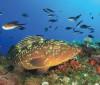 Ministério da Agricultura pede fim de lista de peixes ameaçados
