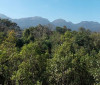 Desmatamento no último ano foi o menor desde 1985, diz pesquisa