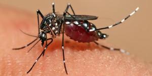 Piauí: Casos de Dengue quase duplicam em 2019