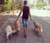 Dog walker ajuda tutores com passeios e adestramento de cães