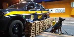 Cão farejador da PRF encontra carga de droga avaliada em R$ 2 milhões