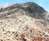PI se consolida como maior produtor de pó de carnaúba do Brasil