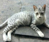 Projeto arrecada material reciclado para custear castração de gatos