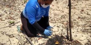 Após vazamento de óleo, peixes-boi desaparecem de santuário no PI