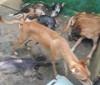Polícia Civil resgata 23 animais em suposto abrigo clandestino