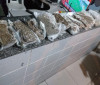 Polícia Militar encontrados 12 kg de maconha dentro de lagoa