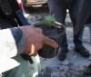 Homem é preso após ser flagrado com pé de maconha e munições no Dirceu