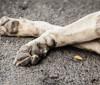 Projeto de lei prevê multa de R$ 10 mil para quem atropelar animais e não prestar socorro