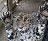 Zoobotânico vai simular habitats nativos nos recintos dos animais
