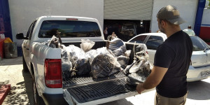 Polícia apreende peças de veículos roubadas em lojas na zona Sul de Teresina