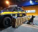 Cão farejador da PRF encontra droga avaliada em R$ 2 milhões
