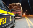 PRF apreende carga de madeira ilegal avaliada em R$ 30 mil