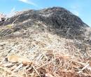 Produção cai, mas PI ainda é maior produtor de pó de carnaúba do país