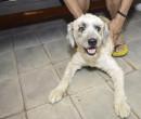 Teresina: sanciona Lei em apoio à causa animal