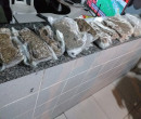 PM encontra 12 kg de maconha dentro de lagoa em Teresina