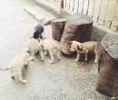 Teresina: Projeto que prevê desconto no IPTU para quem adotar animal é criticado