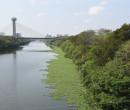 Aguapés começam a se formar no Rio Poty e gera alerta em ambientalistas