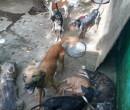 Quem maltratar animais em Teresina poderá pagar multa, diz projeto de Lei