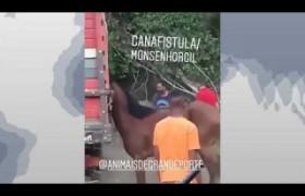 BOM DIA NEWS 18 09  Homem agride cavalo a pauladas