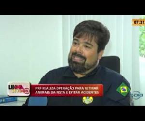 TV O Dia - LINHA DE FOGO 27 01 2020 PRF REALIZA OPERAÇÃO PARA RETIRAR ANIMAIS DA PISTA E EVITAR ACIDENTES