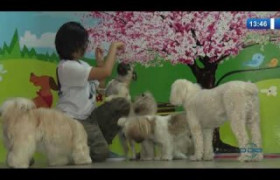 O DIA NEWS 02 01 2020  Pets: hotel para animais