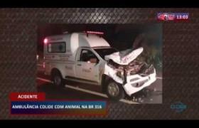 ROTA DO DIA 20 03 20  Ambulância colide com animal na BR 316