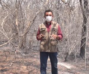 TV O Dia - Fauna e flora do semiárido piauiense é devastado por queimadas 25 09 2021