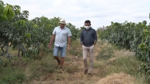 Produtores usam rio para irrigar plantações de frutos em Conceição de Canindé 09 10 2021